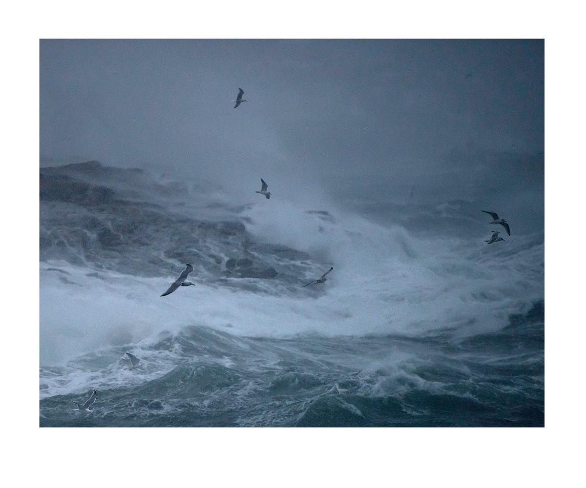 """Dette bildet ga Ebba 1. plass i NM i foto (NSFF) tema """"Natur"""" med bildet """"Stormfugler"""". Det ble fotografert da orkanen Ole herjet Bodø i februar."""